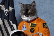 'Cosmic Kitty' sent to space by real estate investors.
