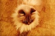 Dorofei, Dmitry Medvedev's cat.