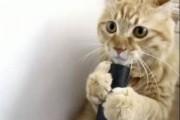 Cute cat with vacuum cleaner
